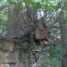 Wurzelwerk zerstört das Denkmal