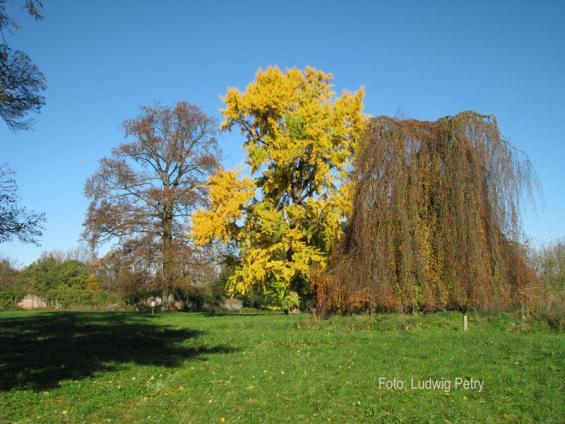Herbststimmung im Park am Tag der Feier