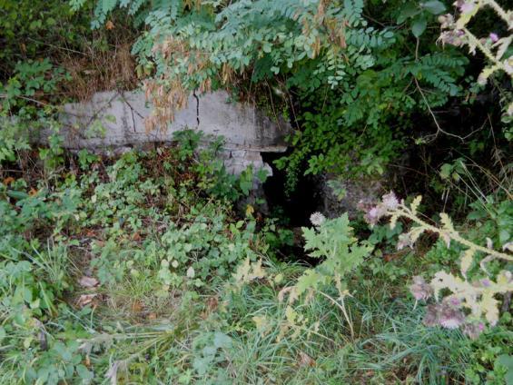 Wildwuchs vor dem Kellergewölbe