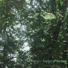 ...integriert in die Natur (Blick durch die rückseitige Glaswand)