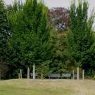 """Die vor wenigen Jahren gepflanzten Ulmen  auf dem sog. """"Ulmenhügel"""""""