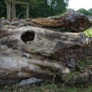 Erinnerung an den früheren Baumbestand im Park